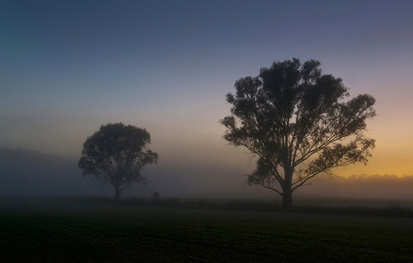 Picture field, summer, trees, fog, dawn, morning