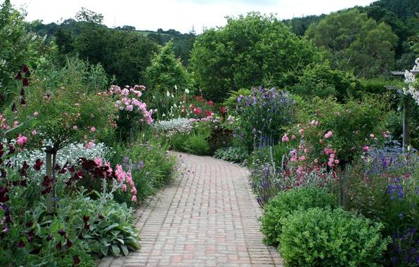 Picture trees, flowers, garden, track, UK, the bushes, Rosemoor Rose Garden