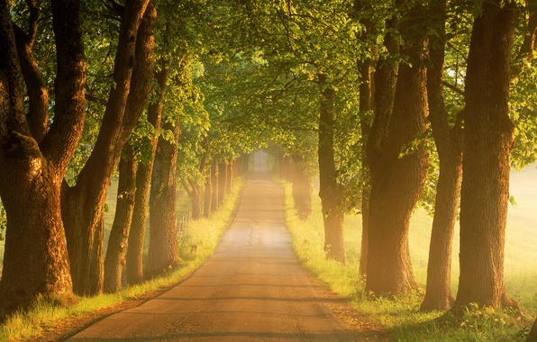 Picture road, summer, trees, fog, sunrise, morning, Sweden