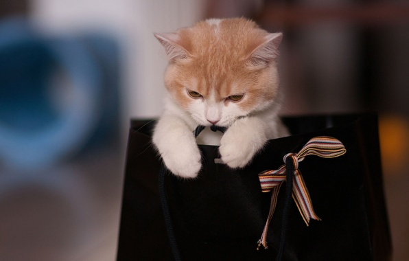 Picture cat, the game, package, tape, bag, bow, Ben Torode, Hannah