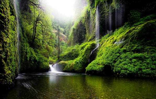 Picture greens, leaves, water, trees, nature, river, spring, USA, waterfalls, Oregon