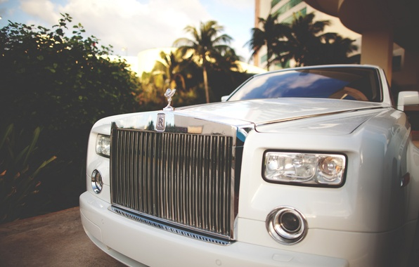 Picture car, palm trees, rolls royce, white, the front, phantom, luxury, exotic