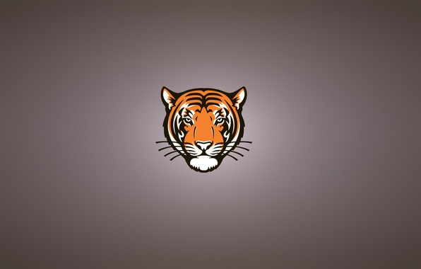Picture face, tiger, minimalism, head, serious, tiger, baleen