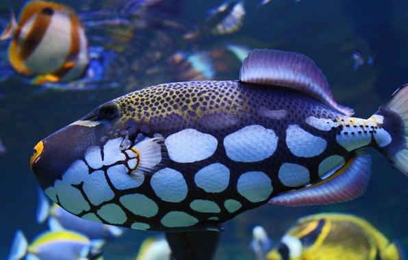 Picture color, fish, spot, underwater world