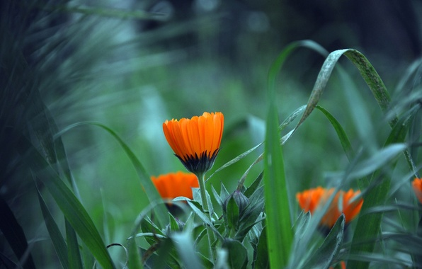 Picture flower, grass, leaves, plant, petals, garden, meadow