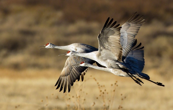 Picture FLIGHT, TRIO, PACK, BIRDS, STORKS