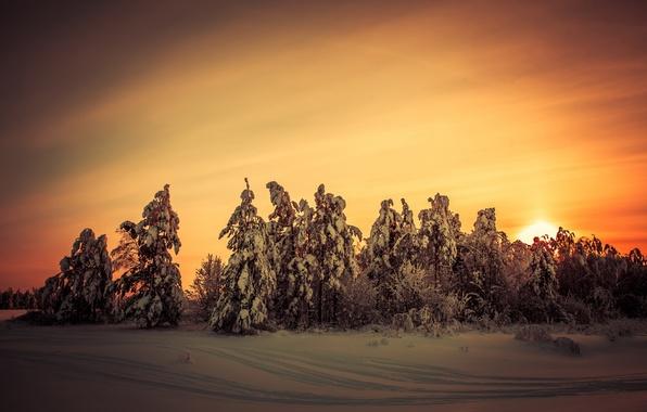 Picture winter, landscape, sunset, nature