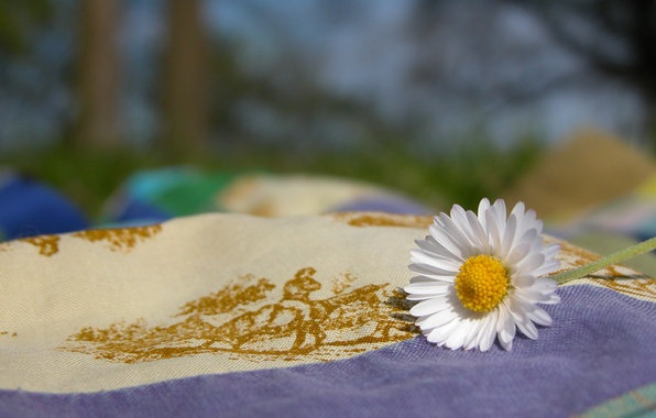 Picture nature, Daisy, fabric