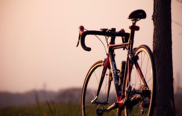 Picture greens, nature, bike, background, tree, widescreen, Wallpaper, mood, blur, wheel, the wheel, wheel, trunk, wallpaper, ...