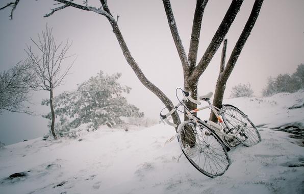 Picture winter, snow, bike, tree