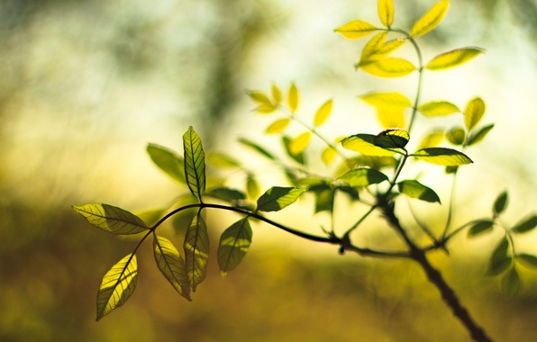 Picture macro, green, background, Wallpaper, plant, blur, leaf, wallpaper, leaf, widescreen, leaves, background, leaves, macro, full ...