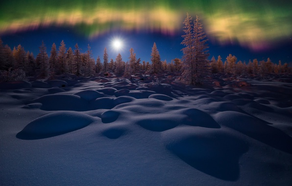 Picture winter, forest, the sky, snow, trees, night, Northern lights, the snow
