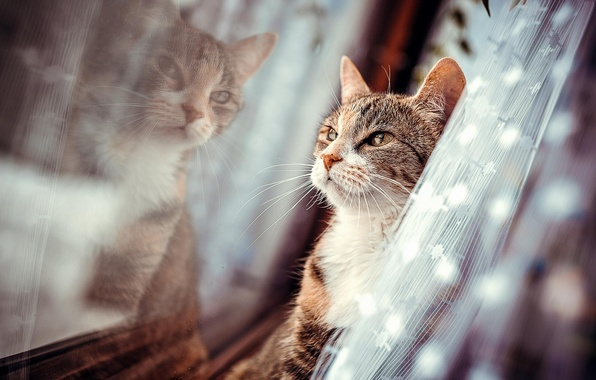 Picture reflection, wool, Cat, window, blind