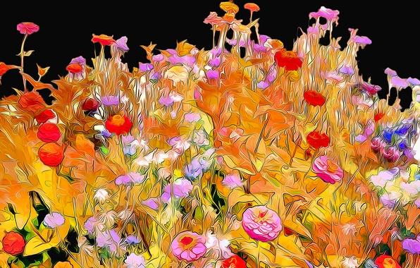 Picture line, flowers, rendering, background, paint, petals, garden, flowerbed