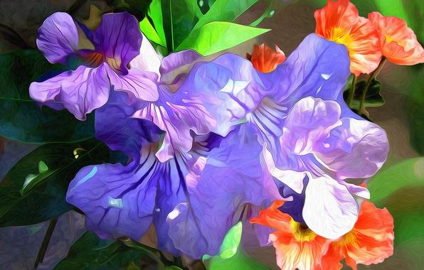 Picture macro, line, flowers, paint, petals, touch