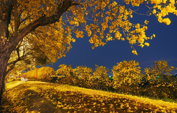 Picture autumn, leaves, light, trees, night, Park, bench