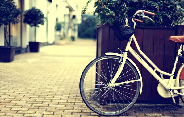 Picture flowers, bike, city, the city, background, widescreen, Wallpaper, street, basket, plant, wheel, wallpaper, bicycle, basket, …
