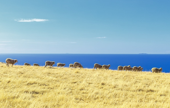 Picture ocean, sheep, islands, stove