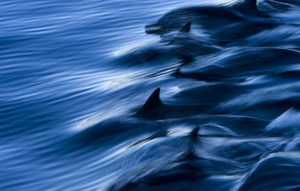 Picture sea, water, squirt, speed, dolphins