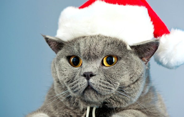 Picture cat, eyes, cat, grey, hat, yellow, New Year, British, Christmas