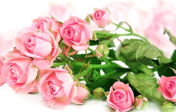 Picture drops, roses, bouquet, pink, buds, bokeh