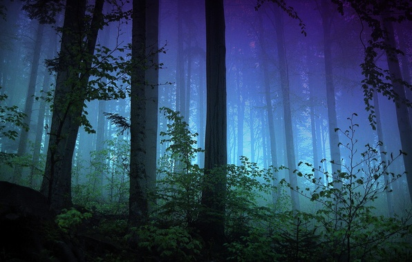 Picture forest, light, trees, night, branches, fog, the evening, the bushes