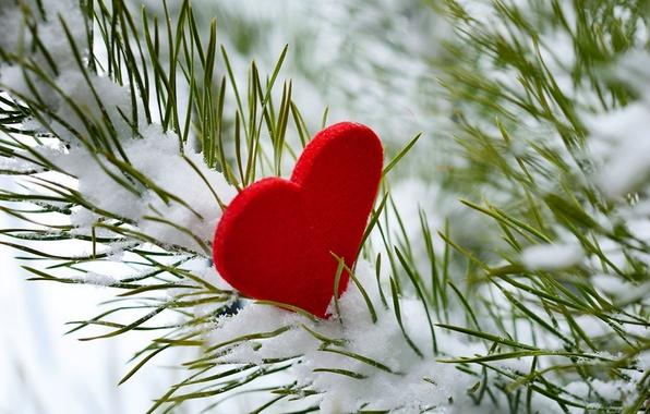 Picture winter, snow, love, tree, heart, love, i love you, heart, winter, snow
