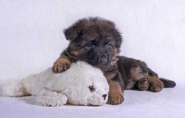 Picture toy, puppy, shepherd, German