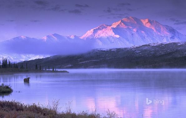 Picture the sky, mountains, lake, Alaska, USA, moose, Wonder Lake