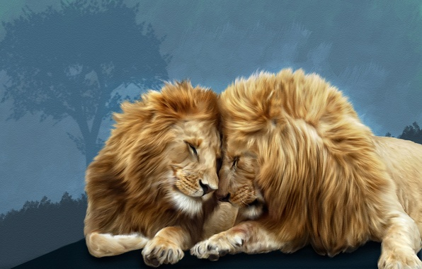 Picture lions, Photoshop, brotherly love