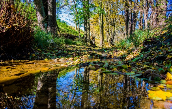 Picture autumn, forest, leaves, water, trees, nature, reflection, time of the year