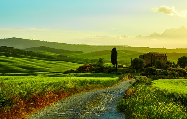 Picture road, greens, grass, trees, house, field, Italy, the bushes, meadows, Tuscany, Tuscany