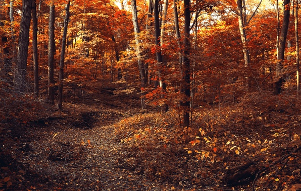 Picture autumn, forest, leaves, trees, branches, nature, foliage, yellow, orange, path