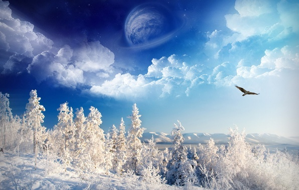 Picture winter, the sky, snow, trees, eagle, planet