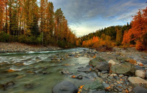 Picture autumn, forest, river, stones, stream, Alaska