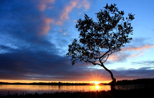 Picture the sky, the sun, clouds, rays, river, sunrise, tree, shore, morning