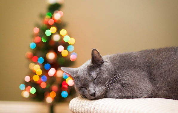 Picture cat, cat, lights, tree, sleeping, tree, grey, holidays, bokeh