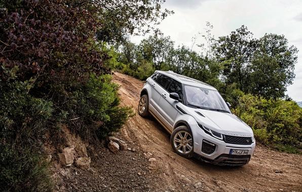 Picture Land Rover, Range Rover, Evoque, Ewok, range Rover, 2015