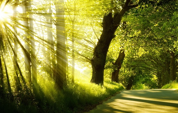 Picture road, summer, grass, the sun, rays, trees, fog, Park, sunrise, morning