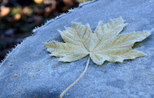 Photo wallpaper frost, autumn, macro, sheet