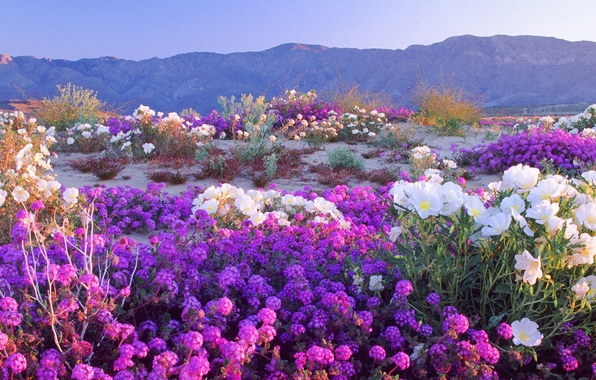 Picture the sky, flowers, mountains, meadow