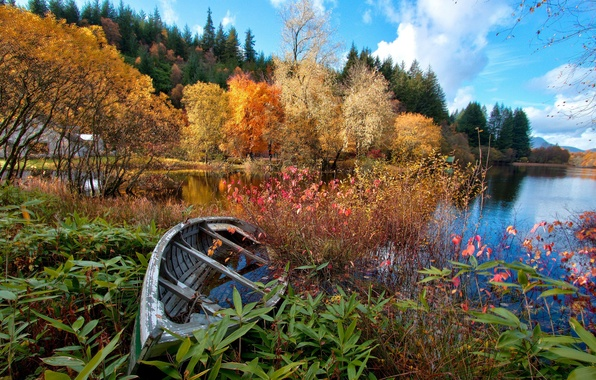 Picture autumn, forest, the sky, trees, flowers, lake, river, boat, house
