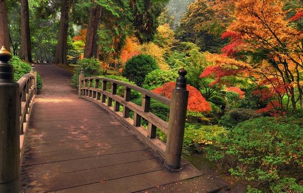 Picture autumn, leaves, trees, flowers, bridge, nature, Park, colors, colorful, colorful, trees, nature, beautiful, bridge, park, …