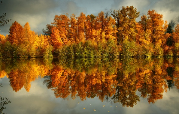 Picture forest, water, trees, nature, photo, coast, Autumn, yellow