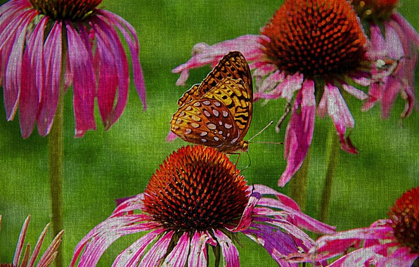 Picture flowers, nature, butterfly, canvas
