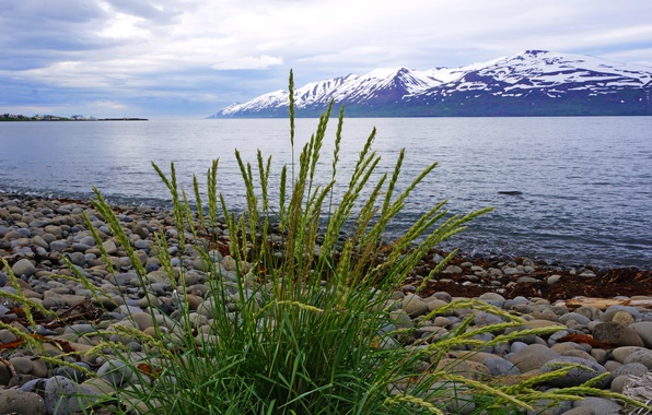 Picture grass, mountains, stones, shore, glacier, Iceland, away