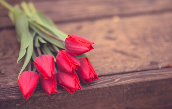 Picture flowers, background, widescreen, Wallpaper, roses, wallpaper, pink, rose, flowers, flower, widescreen, background, full screen, HD …