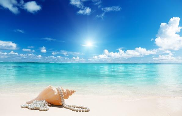 Picture sunshine, beach, sea, sand, seashell