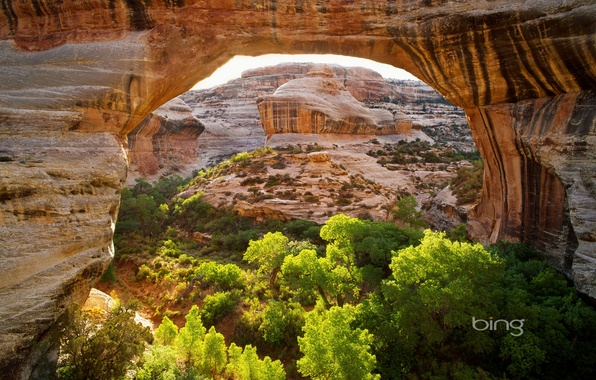 Picture trees, mountains, bridge, rocks, arch, Utah, USA, Natural Bridges National Monument