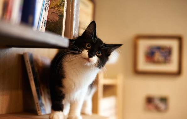 Picture look, house, room, black and white, fluffy, Cat